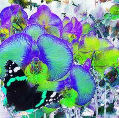 Blue Orchids (virtually_supine popping in and out) Tags: painterly photomanipulation butterfly effects paint orchids bright mosaic creative picasa textures montage layers effect orton digitalartwork fauvism photoshopelements9 sourceimagebybrillianthues tmichallengeinthestyleoffauvism kreativepeoplechallengetreatthis114 vividvolour daubsdissolve
