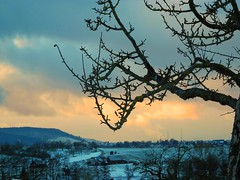 Im letzten Licht (almresi1) Tags: schnee snow tree landscape landschaft baum weinstadt strmpfelbach