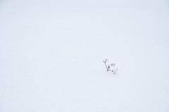 Tu vis/You live/Du lever [Explore] (Elf-8) Tags: white snow minimalism emptiness