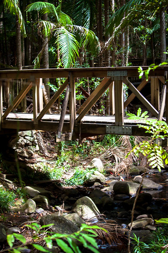 Boardwalk to Buderim Falls