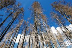 DSC_2613A (vkalivoda) Tags: trees mountain landscape outdoor lanscape umava hory krajina stromy esko bhmerwald landscapesdreams