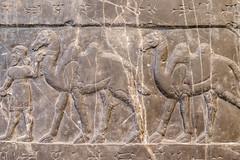 DSCF6997.jpg (Darren and Brad) Tags: england london camels thebritishmuseum