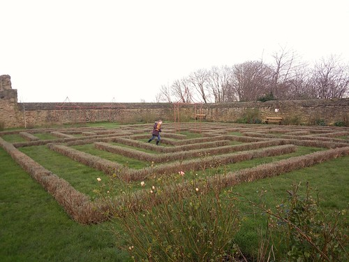 Lavendar maze (Manor)