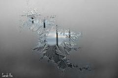 (Sarah-Vie) Tags: ice hiver glace givre frima iceform dsc0003 fabuleuse givresurfenêtre