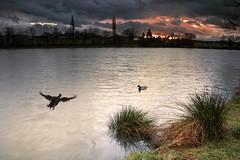 Wild ducks (frantiekl) Tags: winter nature weather animals clouds landscape pond january wildducks westbohemia natureinwinter blovice