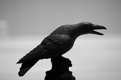 Wooden Crow (olsenkimmorten) Tags: bird monochrome animal woodwork carved crow blackandwite woodworks