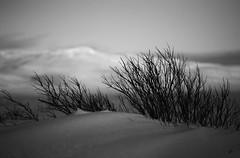 Sleeping Tree (arnthorr) Tags: winter sun tree ice iceland ar tré ragnar búrfell starfilter vetur sól bústaður arnþór sigmar sleði vatnið arnthorr arnþórragnarsson arnthorragnarsson bauluvatn iceslade sigmarogragnar