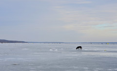 Ice Fisher Dog   (okop555) Tags: travel winter sky ice nature water fog skyline river landscape fishing fisherman nikon village view ngc january sigma ukraine valley viaggio thebest icefishing fishingtrip 2016    icyriver  sigma1750 thebestpicturegallery    nikond7000