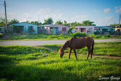 DSC_0045 (Promao80) Tags: lago tramonto cuba moron cavallo viaggio vacanza calesse