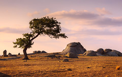 Dog Rocks evening (RWYoung Images) Tags: sunset tree canon landscape evening rocks australia victoria geelong dogrocks rwyoung 5d3