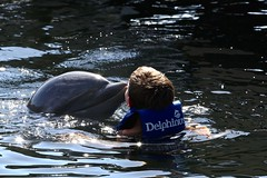 Swimming with dolphins (Juliotrlima) Tags: park vacation praia mexico playa dolphins cancun goodtimes xcarret