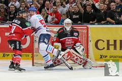 "DEL16 Kölner Haie vs. Adler Mannheim 24.01.2016 061.jpg • <a style=""font-size:0.8em;"" href=""http://www.flickr.com/photos/64442770@N03/24642103420/"" target=""_blank"">View on Flickr</a>"