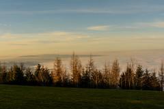 Abendstimmung I (bischofbrigitte) Tags: schweiz switzerland suisse bodensee wald sonnenschein abendstimmung lakeconstance bchel nebelmeer lacdeconstance grubsg fogoverlakeconstance