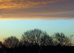 28Jan16 Cloud Bank (Daisy Waring World) Tags: sky clouds sunrise torquoise cloudbank treelinesilhouette