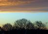 28Jan16 Cloud Bank (Daisy Waring World) Tags: sky clouds sunrise torquoise cloudbank treelinesilhouette