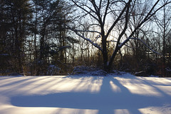 Shadows Over Virgin Snow (Rich Renomeron) Tags: snow greenbelt snowzilla canoneos60d canonefs1585mmf3556isusm