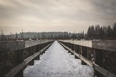 Mer Bleue (Peg Skof) Tags: trees winter ontario canada cold outside ottawa boardwalk ncc bog matte merbleue