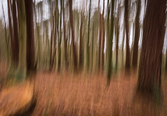 Blurry Trees (susans7777) Tags: trees orange brown blur colour green forest blurry colours autum