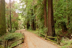Creek Trail, Henry Cowell State Park (Redwood Reverence) Tags: california road santa mountains cali henry cruz redwoods through cowell