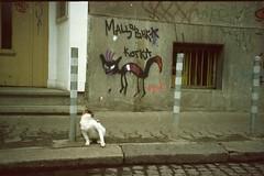 cat (Shtani v Getri) Tags: life camera old color film 35mm fuji sofia lifestyle iso bulgaria 200 24 100 konica mm 36 35 compact oldfilm