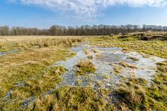 de laatste koude nachten? (Pieter ( PPoot )) Tags: water bevroren wolken gras plas ijs dwingelderveld