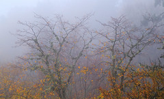 Mystic forest (RKAMARI) Tags: autumn trees colour fall nature yellow fog forest sadness nationalpark cities mystic bolu muted yedigller