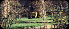 IMG_4443 (sambam007) Tags: green zoo londonzoo canon1755mm 60d