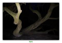 THE LOCH NESS MONSTER (rgisa) Tags: tree amsterdam monster boom loch vondelpark arbre baum ness monstre