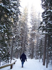 Solitude (E.B Anderson Photo-Email: billybob1959a@gmail.com) Tags: park trees snow happy woods colorado solitude alone forrest walk peaceful serenity rockymountains estespark rockymountainnationalpark