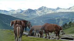 Pireneje 2011 - Andorra Ariegde