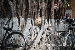 Still life with helmet (10b travelling) Tags: tree asian asia asien southeastasia vietnamese helmet central vietnam hoian ficus mangrove asie indochine indochina rots 2015 tenbrink carstentenbrink iptcbasic 10btravelling
