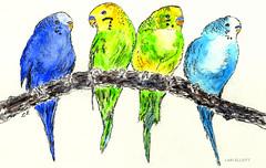 Feathered Friends - Gouache and Pencil (elliott.lani) Tags: blue color colour green art nature beautiful birds yellow pencil painting bright mixedmedia vibrant flight feathers budgerigar colourful gouache lani allrightsreserved budgies budgerigars elliottlani lanielliott