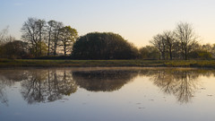 symetrie (look to see) Tags: sunrise belgium beek bree landschap 2016 symetrie sintmaartensheide