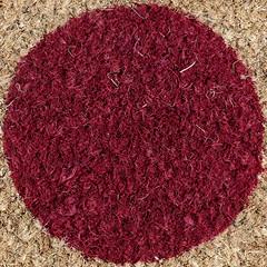 door mat coloured circle (Leo Reynolds) Tags: door lumix coconut panasonic mat squaredcircle welcome fz1000 xleol30x xxx2016xxx sqset123