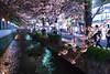 Early Sakura in the Early Evening at Kiyamachi (Jake in Japan) Tags: japan night river spring kyoto sony 京都 桜 日本 cherryblossoms 夜景 takasegawa kiyamachi 川 maruyamapark 高瀬川 takaseriver 木屋町 apsc a6300 sel24f18z sonye24mmf18za ©jakejung α6300 ilce6300