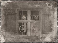 Kollodium-Nassplatte(digital) (novofotoo) Tags: bayern deutschland digitalimaging beilngries fotoeigenschaften kollodiumnassplatte