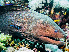 IMG_0340 (eye[4]eye) Tags: egypt diving gypten tauchen bluewaves