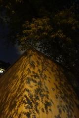 DSC02461 (The Man-Machine) Tags: shadow tree leaves lightpollution