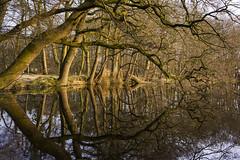Branchy - Verzweigt (pwendeler) Tags: wood brown tree nature yellow branch natur wald spiegelbild baum zweig sonynex7 petrawendeler