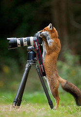 Animals That Want To Be a Photographers (PhotographyPLUS) Tags: pictures graphics photos illustrations images stockphotos articles footage stockimage freephoto stockphotograph