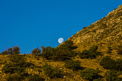 _40A3296 (ChefeGrande) Tags: trees moon silhouette sunrise landscape rocks texas outdoor fullmoon westtexas moonset guadalupemountains