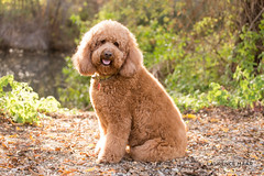 2015-12-13-277-0342-2048LM (Laurence Maar Photography) Tags: pictures life california family light portrait people dog cute love dogs cali portraits canon puppy landscape fun photography puppies pretty couples laugh portfolio lovely canon70200mm canon6d