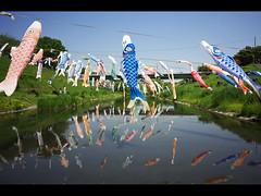 Snap Photographs (Toshi_KMR) Tags: japan nikon coolpix     nhvf28 kimtoshi toshikmr nikoncoolpixa coolpixa  a