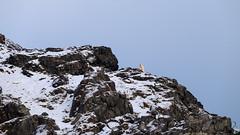 The king on Karl XII Island (vandrende) Tags: landscape svalbard polarbear paysage landskap spitzbergen isbjrn sjm ourspolaire svalbardandjanmayen kongsberget karlxiiya