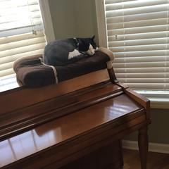 Piano Cat (ShanMcG213) Tags: cats cat alabama catnap lazy cina blackandwhitecat lazycats whiteandblackcat pinao