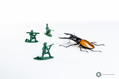 Get back! ([inFocus]) Tags: canon bug studio toy soldier toys actionfigure miniature fight action beetle creative 5d tabletop stagbeetle 2470mm strobist 5dmkiii 2470mmf28lii andrewwellsphotography