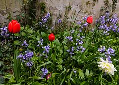 20160424-5D3_9454 (Terry Payman) Tags: garden jeannette