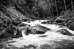 North Cascades - Creek (mfenne) Tags: leica water creek landscape washington north images cascades marlowe fenne drala