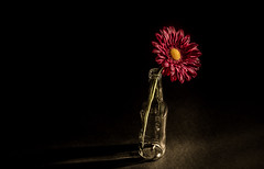 art official - 115/366 (auntneecey) Tags: stilllife flower blackbackground bottle dramatic slide artificial lowkey odc hss day115366 sliderssunday 366the2016edition 3662016 24apr16