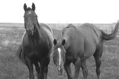 UV Horses